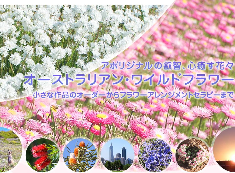 アボリジニの叡智、心癒す花々 オーストラリアン・ワイルドフラワー